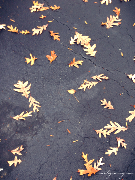 leaves on the drive